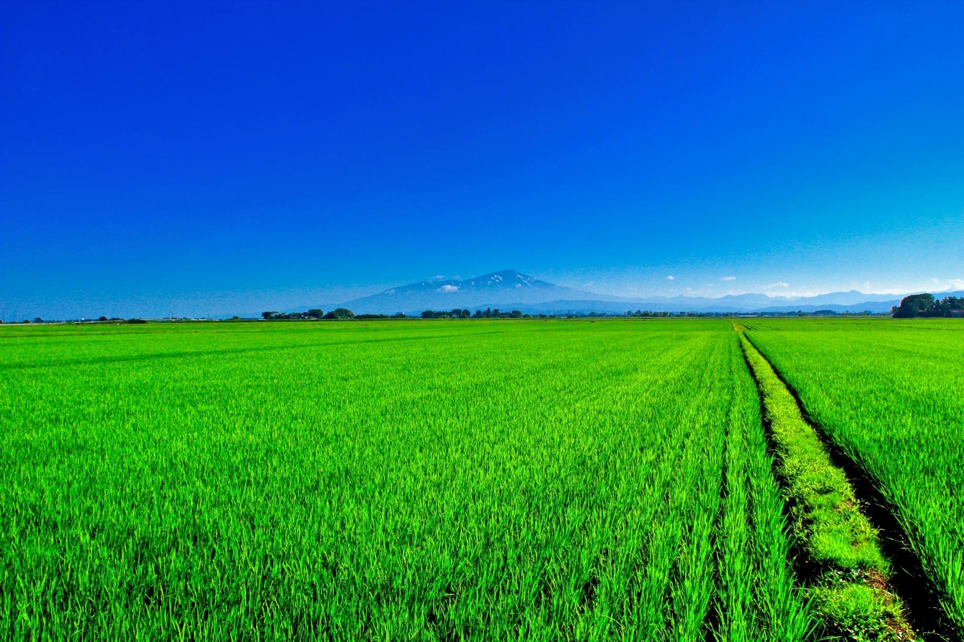 鳥海山と田園風景